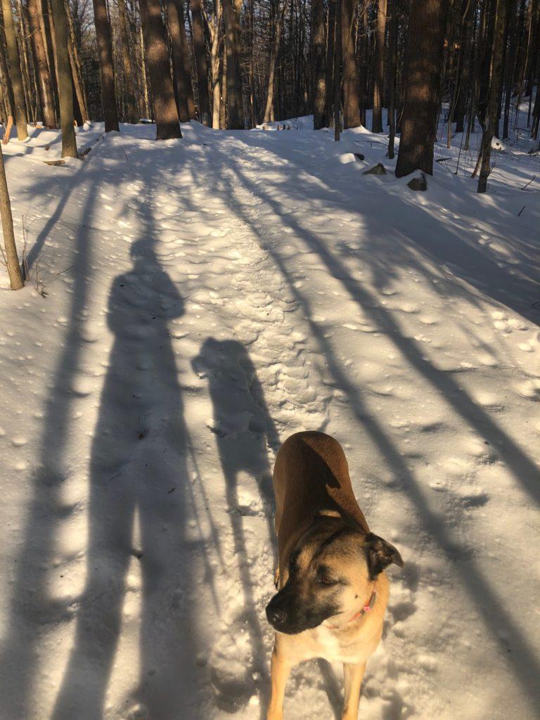 Winant Trails in Concord