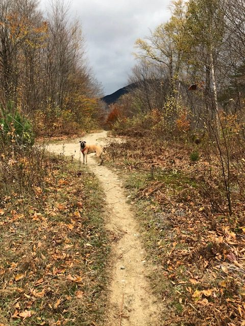 Bunnell Notch Trail