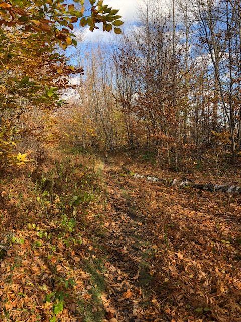 Starr King Trail
